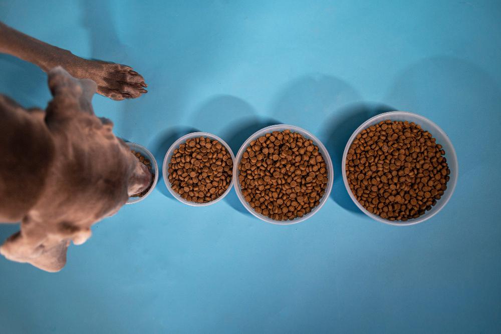 briketi hrana za pse pasja hrana